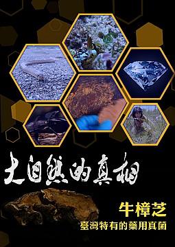 牛樟芝-臺灣特有的藥用真菌
