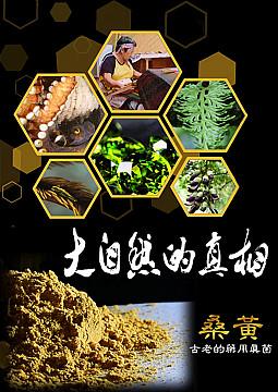 桑黃-古老的藥用真菌